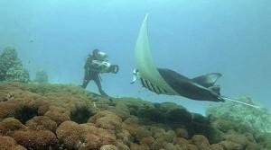 рыба скат